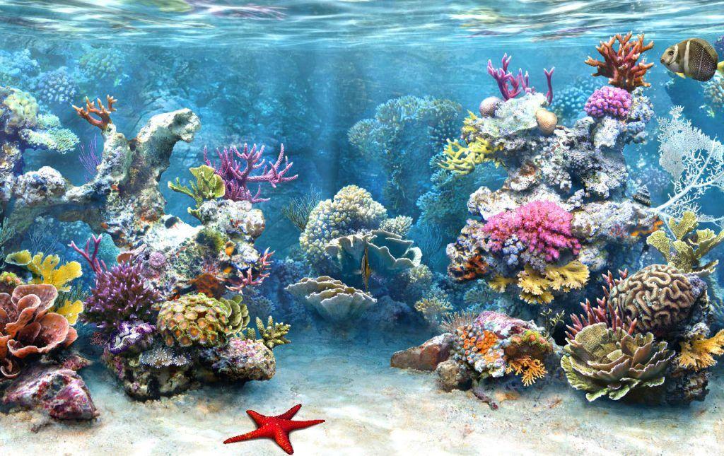 Bellísimos Arrecifes De Coral Hd Arrecifes De Coral Fondo De Pecera Fondos Para Peceras