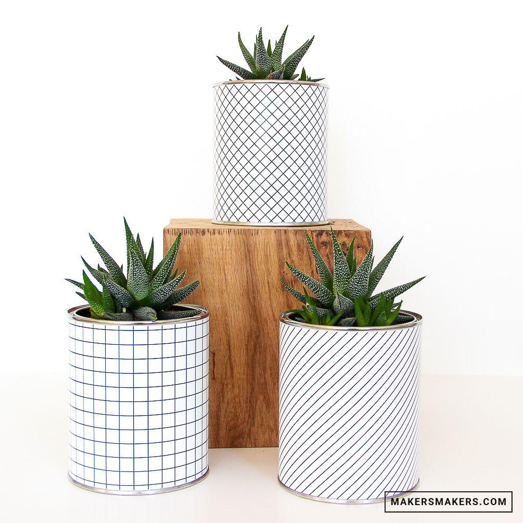 Pot A Carreaux Pour Plante Grasse Ou Cactus Plantes Grasses