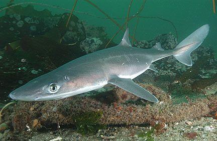 Shark Fishing With Darwin Shark Fishing Dogfish Shark Species Of Sharks