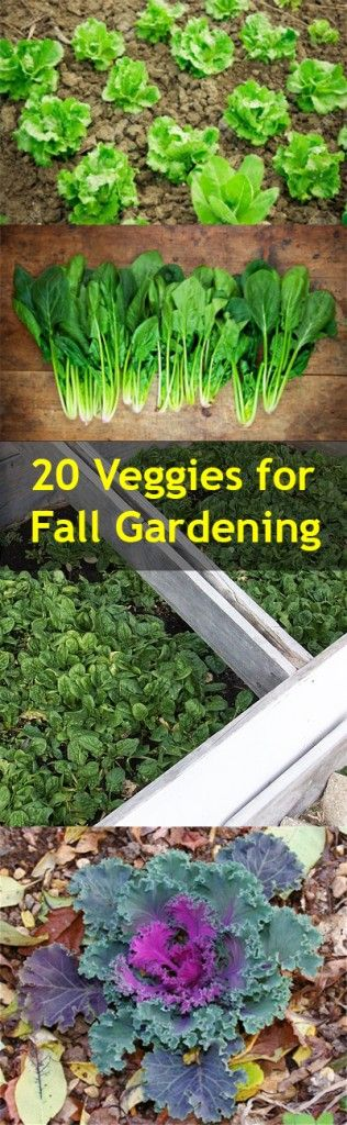 20 Veggies for Fall Gardening