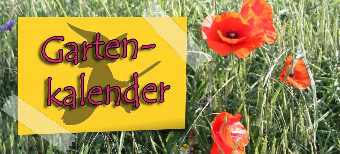 Gartenkalender Juni Zwischen Wachsen Und Wechseln Gartenkalender Aussaat Kalender Garten