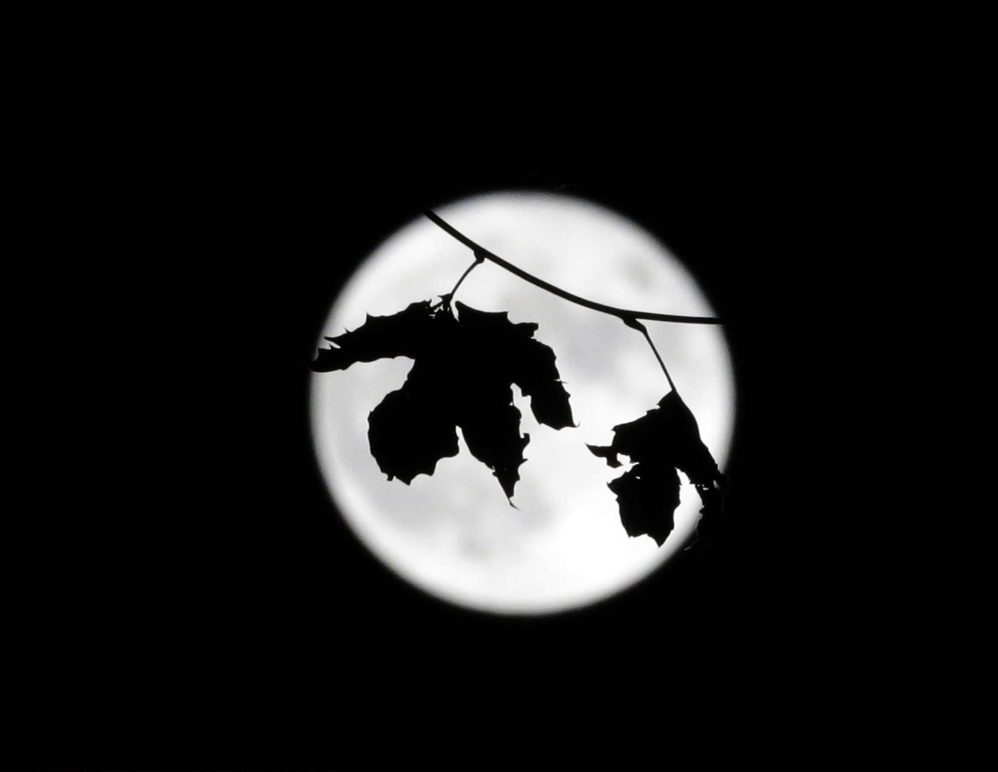 Super moon sets behind a tree, still hanging on to one or two leaves, in Marseille, southern France. © Claude Paris / AP / SIPA