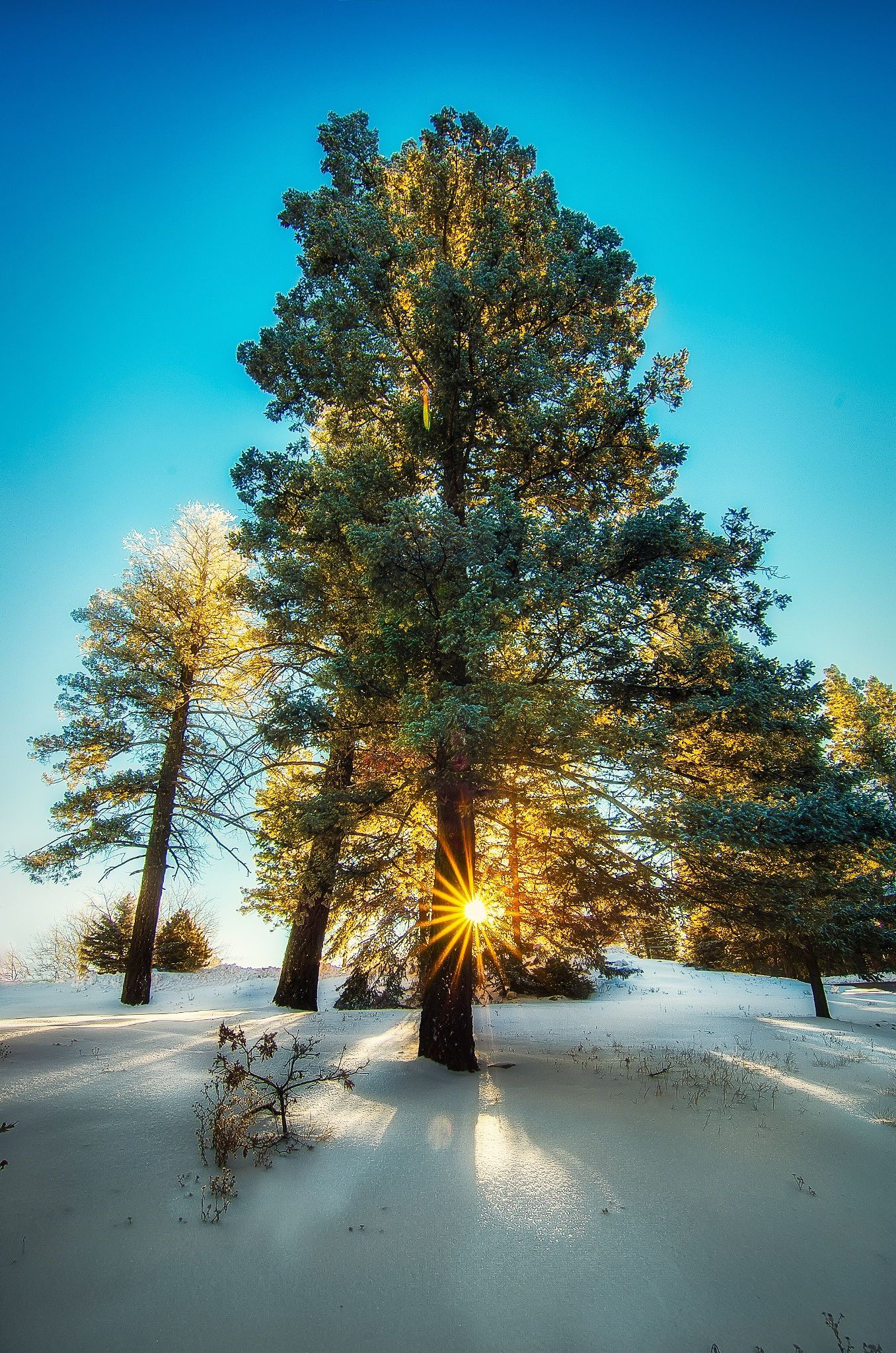 Sunlite Tree by Snowman4 on 500px