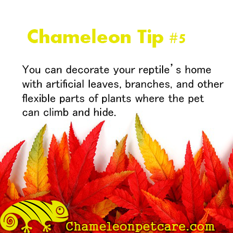 Get the best Help and Tips to care for your chameleon