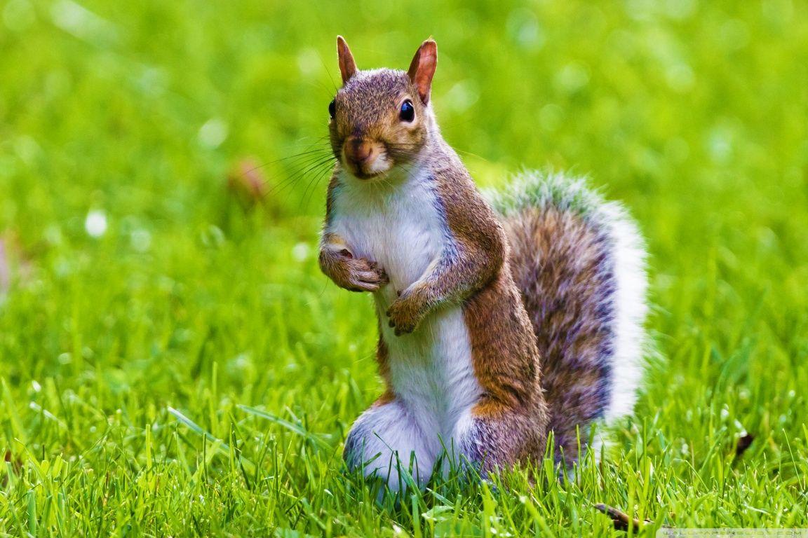 Cute Squirrel HD Desktop Wallpaper Fullscreen Mobile