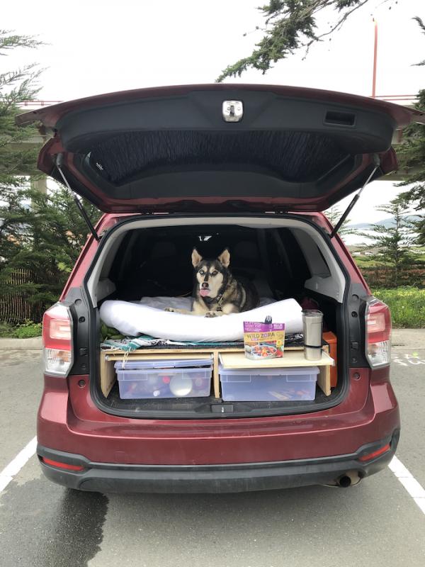 How I Turned My Suv Into The Ultimate Camper Suv Camper Subaru Forester Camper
