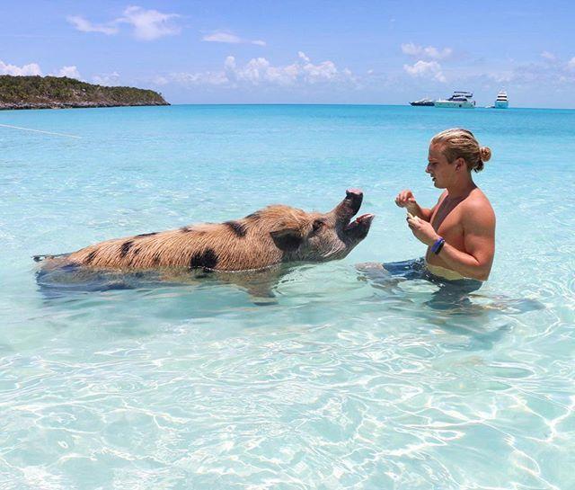 Pig Beach Exuma Bahamas Beaches Booze And Bungalows
