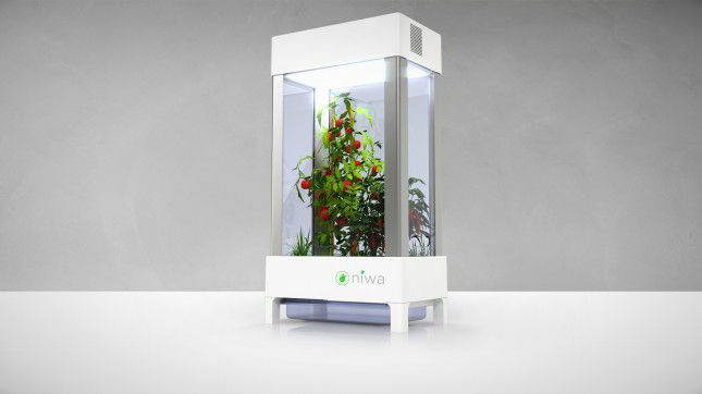 The $200 Hydroponic Greenhouse You Control With a Smartphone ...