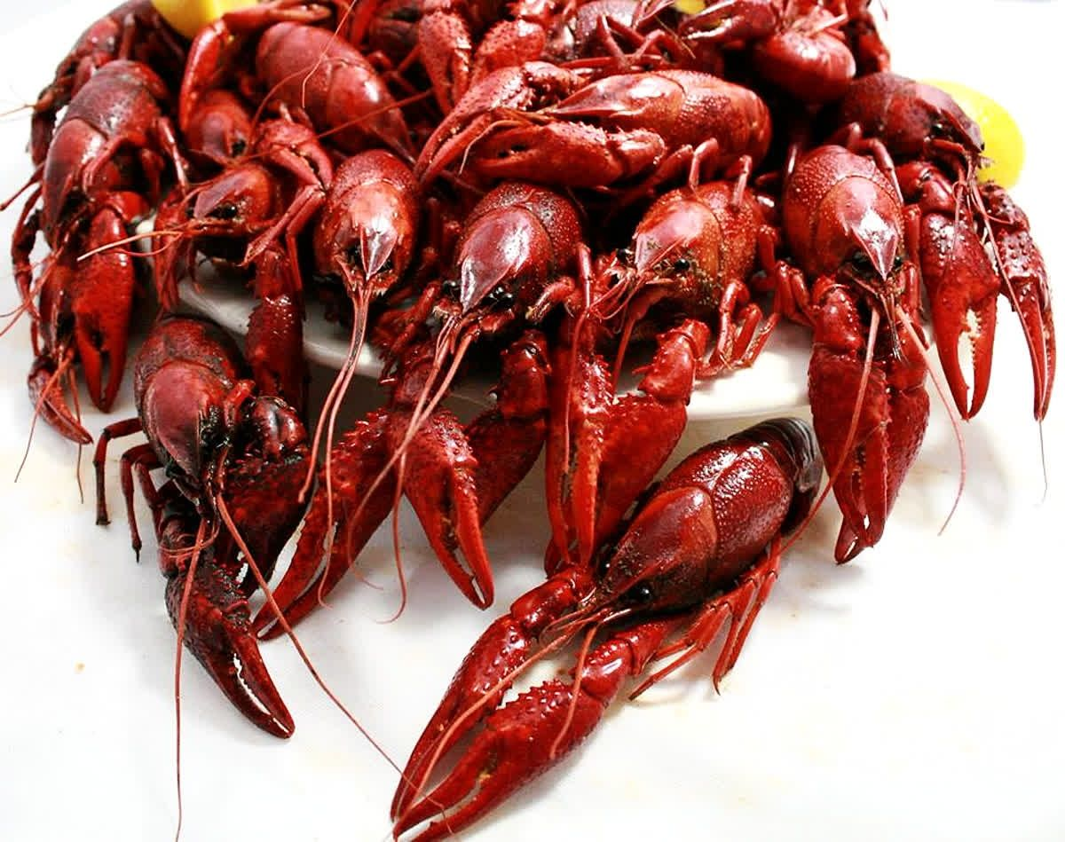Good News! #Crawfish season is set to start December 4th! Come ...