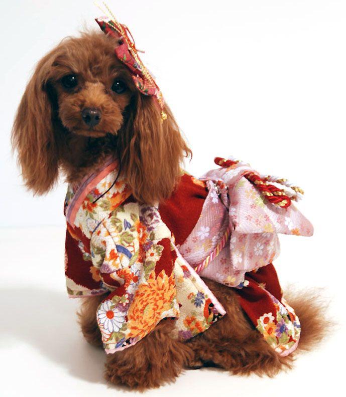 犬 服 代官山nahomillyの 本格 着物 きもの お振袖 犬 犬 服 ハンドメイド 振袖