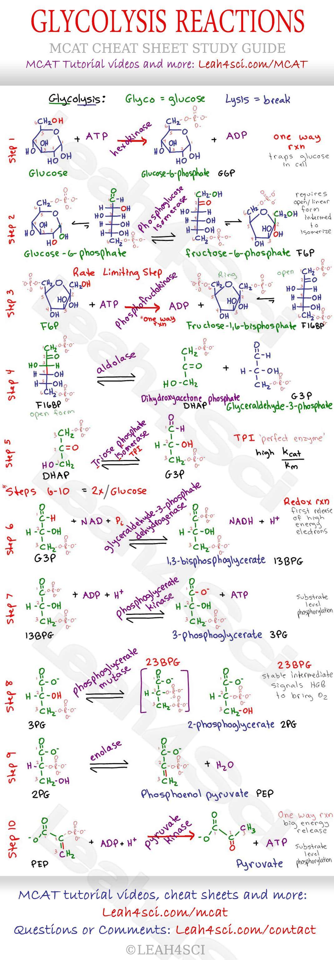 Glycolysis Steps Mcat Study Guide Cheat Sheet Mcat