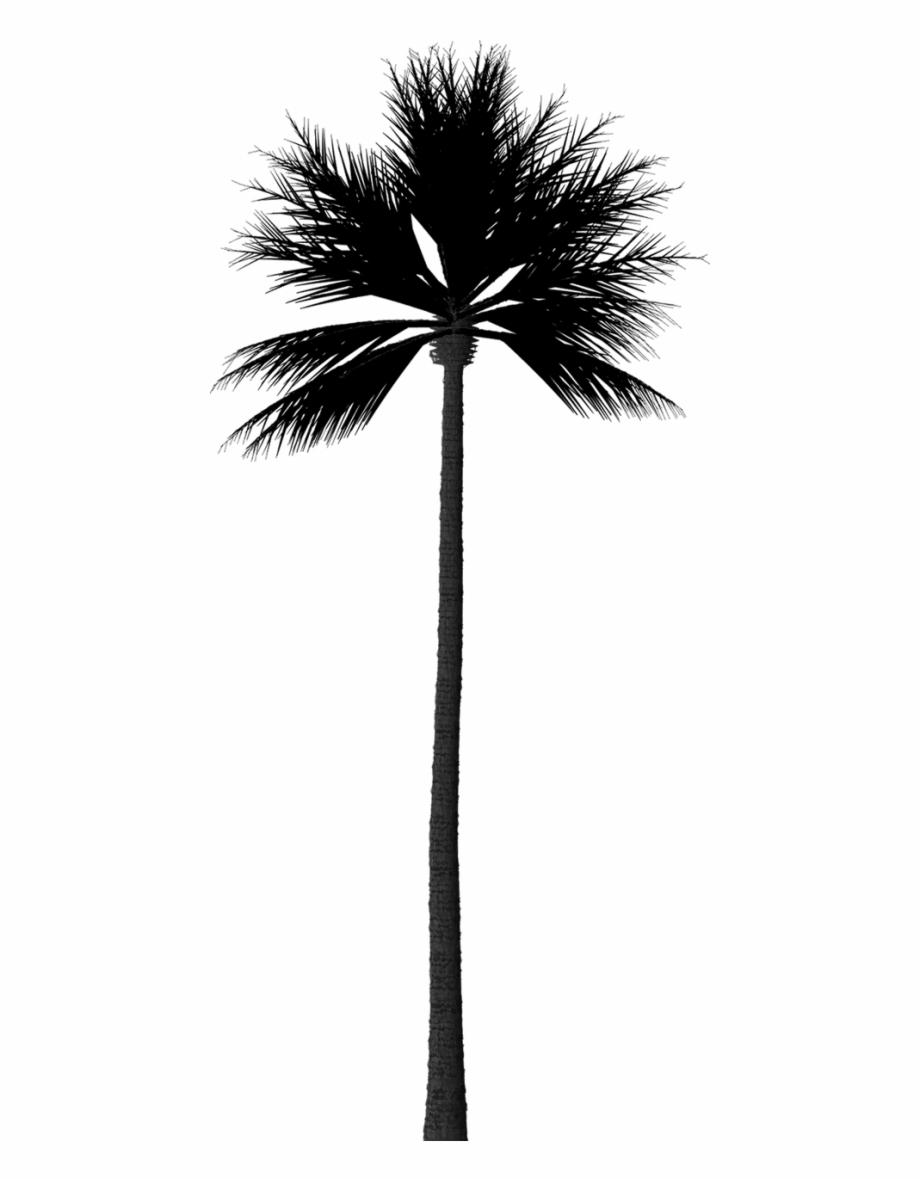 Silhouette Palm Tree Png Silhouette Palm Tree Png Palm Png Silhouette Tree Palm Tree Silhouette Palm Tree Png Palm Tree Clip Art