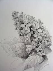Image Result For Butterfly Bush Tattoo Black And White Lilac Tattoo Flower Sketches Horse Tattoo Design