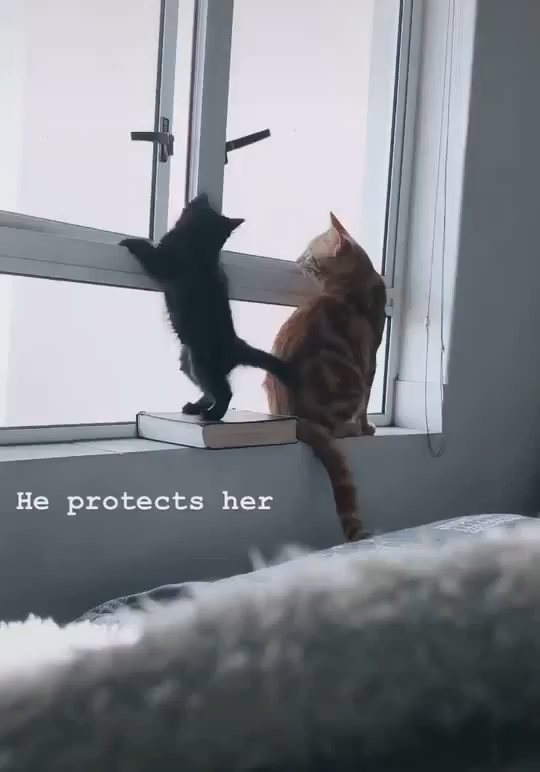 No! –Dad Cat 😊😅