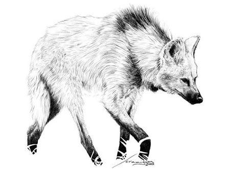 Lobo Guara Desenho Cientificos Pesquisa Google Desenho