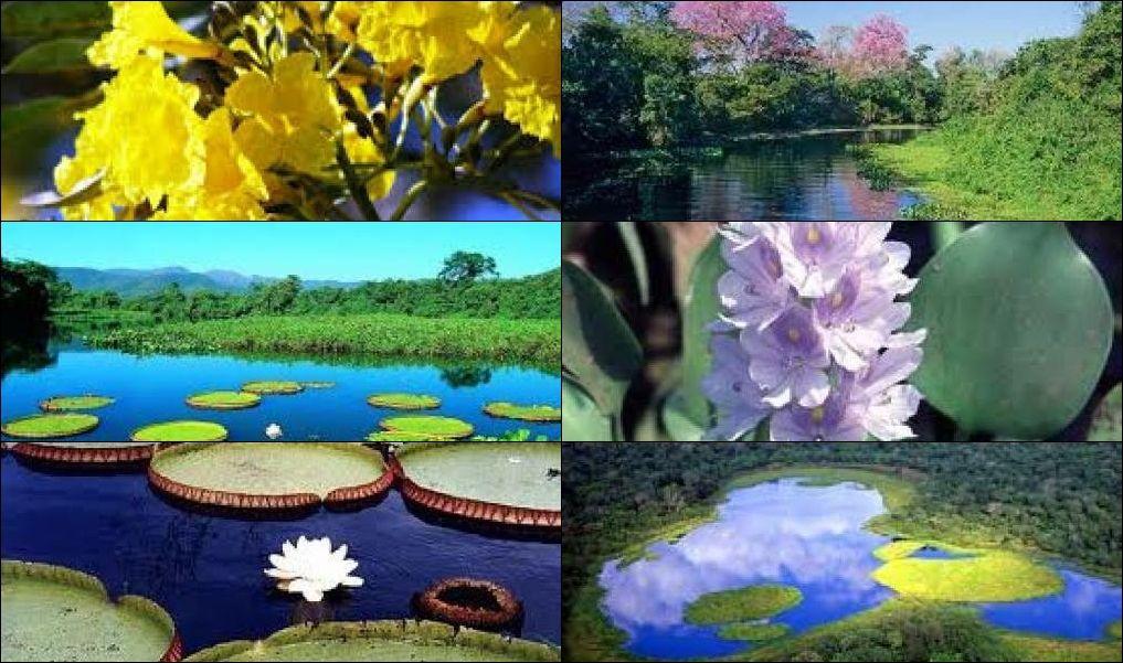 Apicultura Do Pantanal Ms Pesquisa Google Pantanal