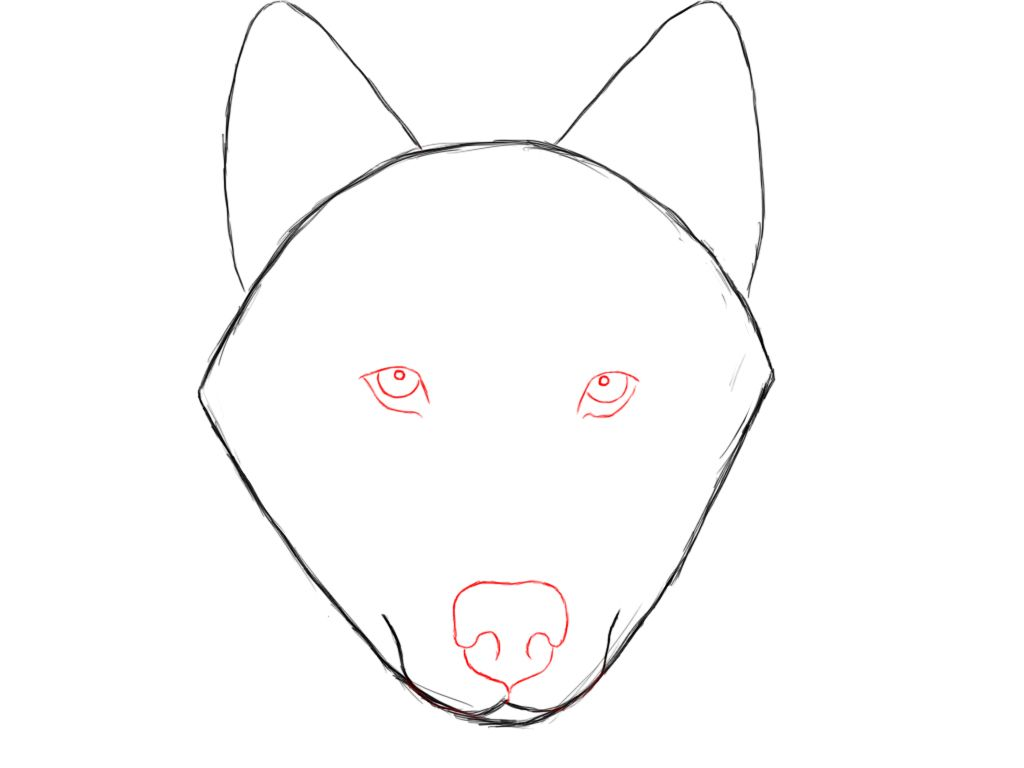 How Do You Draw A Wolf: How To Draw A Wolf Step By Step