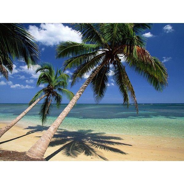 코코넛 / 팜 (coconut / palm) ❤ liked on Polyvore