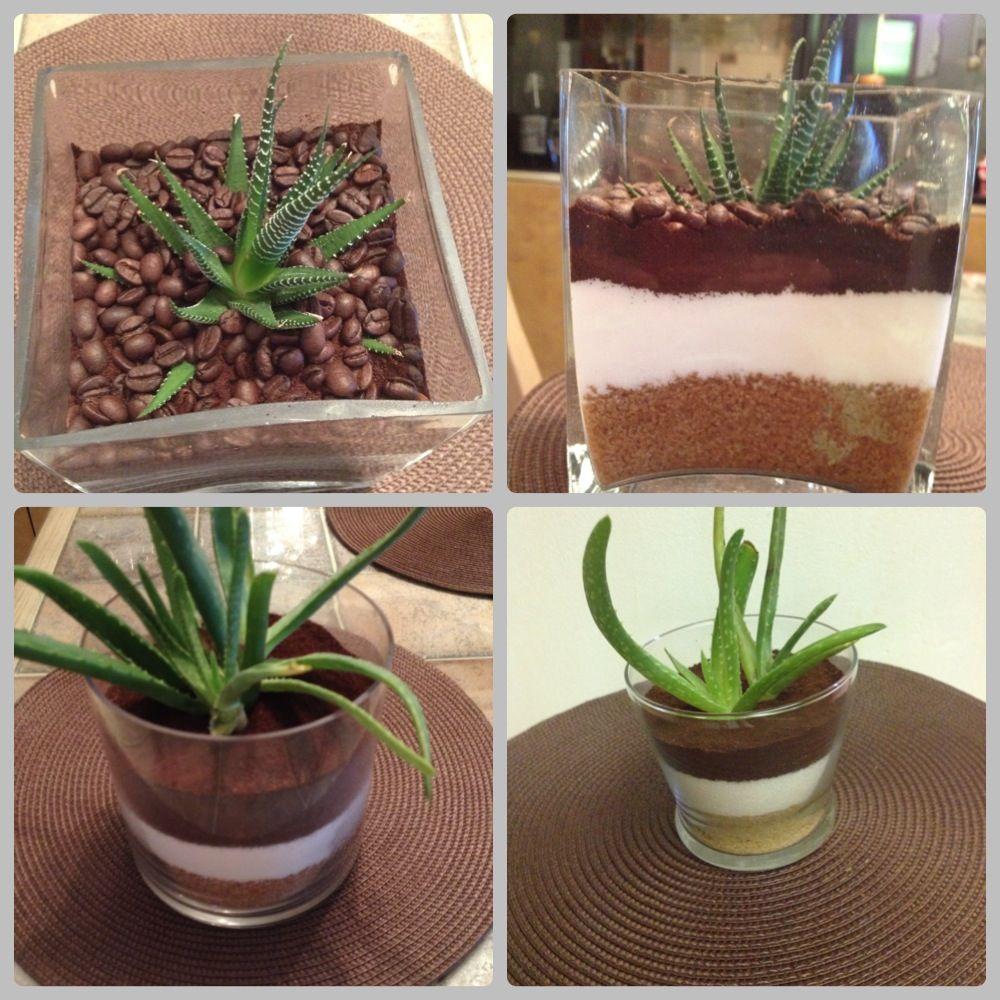 Dos tipos de planta aloe vera como plantas decorativas for Plantas decorativas tipos