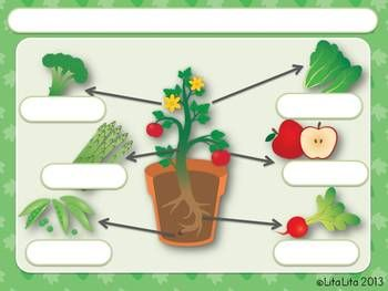 what part of the plant do we eat fold learn gardening with children teaching plants. Black Bedroom Furniture Sets. Home Design Ideas