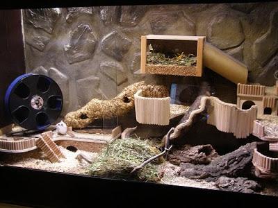 Naturnahe Hamstergehege Gehege Cages Jaulas (mit