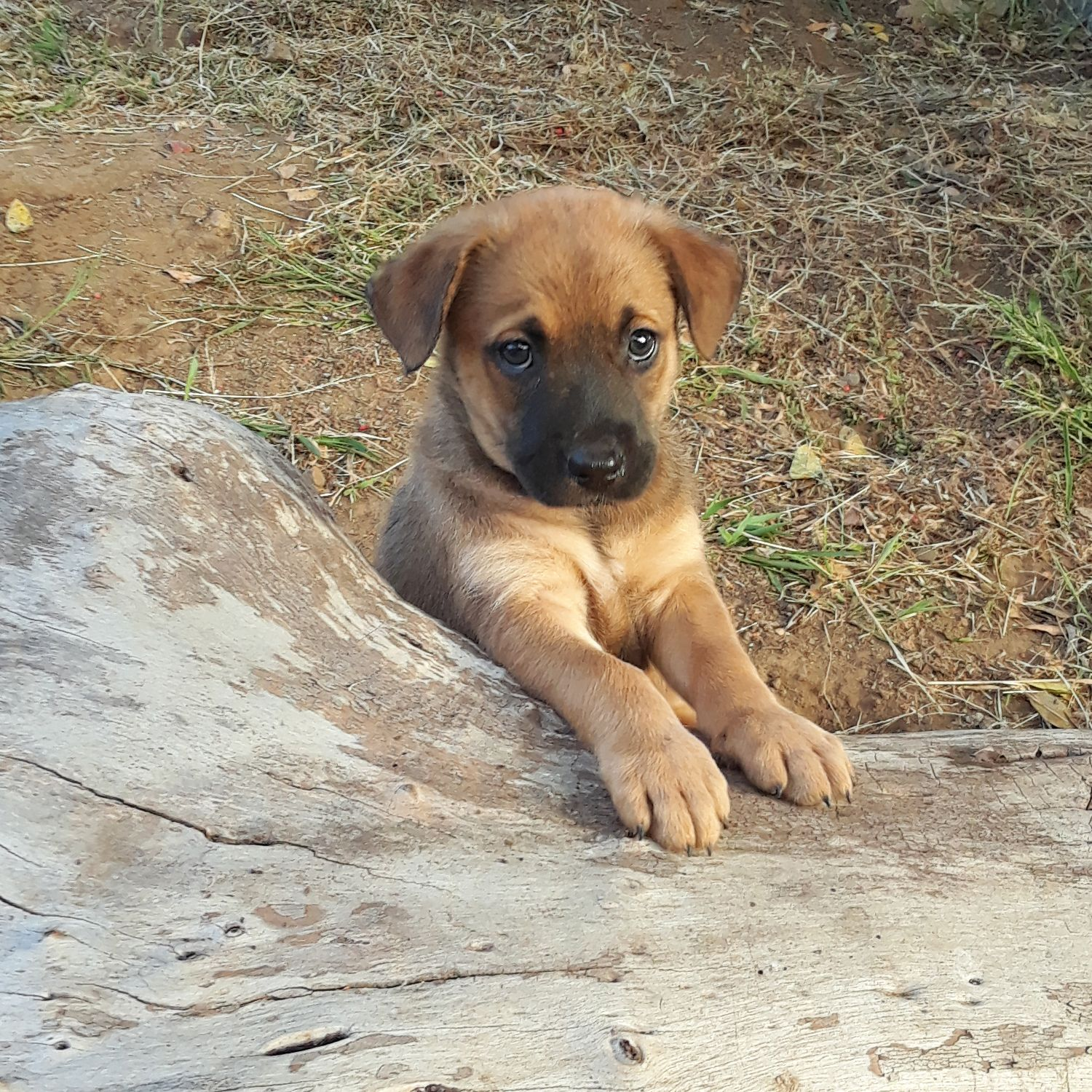 Still A Puppy But What A Hunk Puppies Rescue Dogs Dog Life