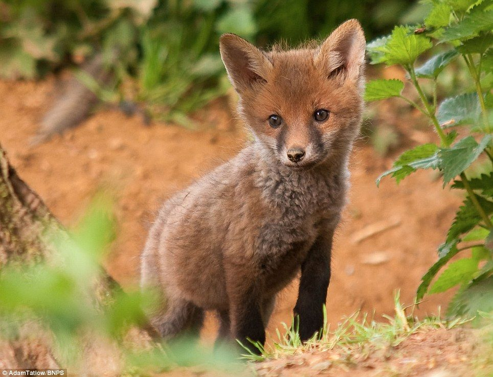 Amazing pictures by 'Dr Dolittle' gamekeeper who is so at