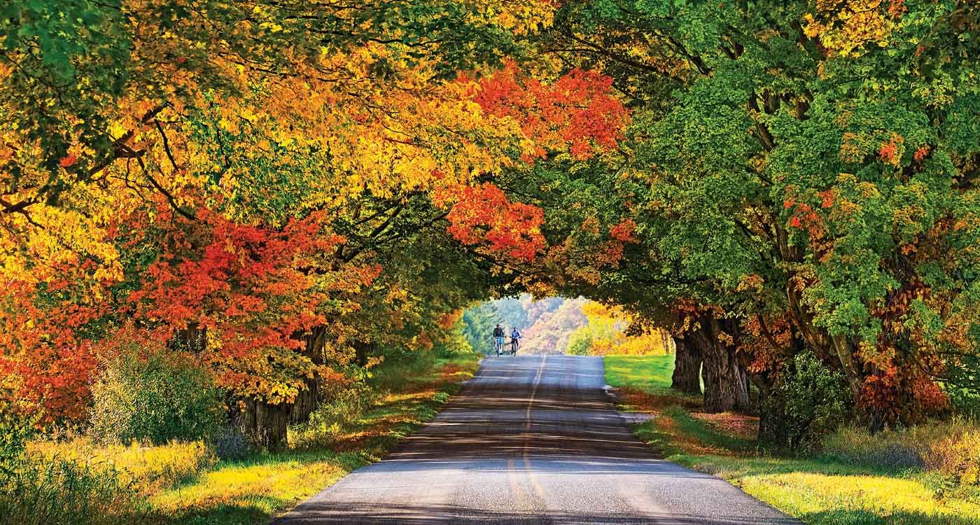 Ludington Michigan Trees. Fall is my favorite season and it doesnt last long down in