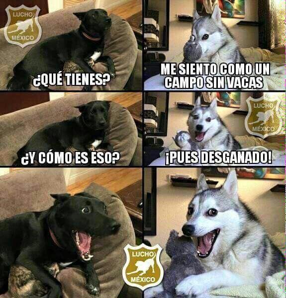 Desganado Funny Memes Cute Memes Husky Memes