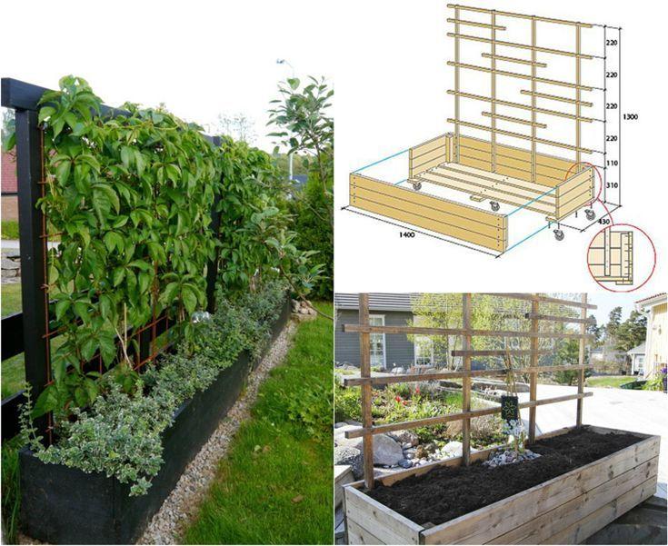 Welche Pflanzen Als Sichtschutz Fur Garten Und Terrasse Tipps Und Arten Welche Pflanzen Als Sich Sichtschutz Garten Sichtschutz Pflanzen Mobiler Sichtschutz