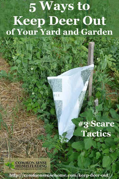 Keep Deer Out of Your Garden - 5 Deer Deterrent Strategies | Yards ...