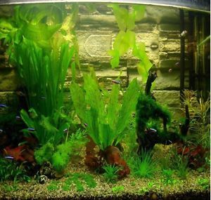 300 Seeds! – aquarium grass seeds (mix) water aquatic plant