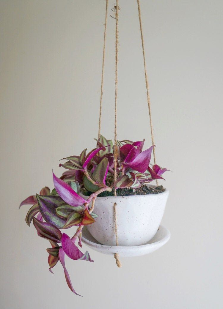 Hanging Planter With Drainage And Built In Saucer Is The Perfect Addition To Any Plant Lovers Space Both Decorative Hanging Planters Planters Air Plant Holder