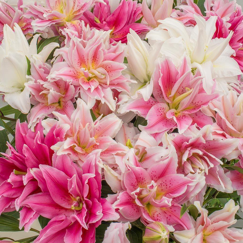 Summer Magic Roselily Mix Flowers Bush Grass Landscape Pinterest