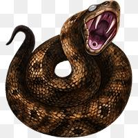 Cottonmouth Snakes Png Cottonmouth Mafia Wars Wiki Fandom Powered By Wikia 200 200 Png Download Free Transparent Butterfly Clip Art Snakes For Sale Mafia