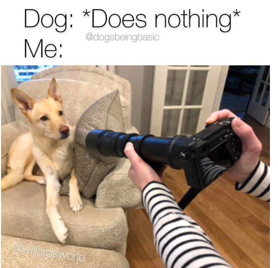 Pin By Jenny De Hoff On Dog Memes In 2021 Funny Dog Memes Dog Memes Funny Dogs