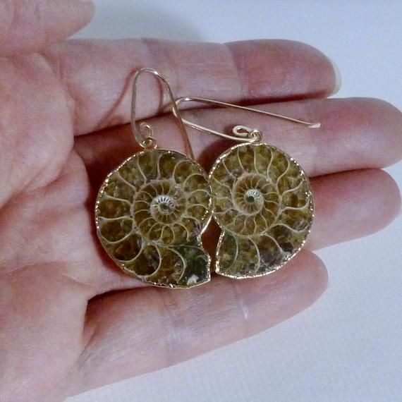Ammonite Fossil Earrings on Artisan Handmade Gold Filled Earwires – 30mm