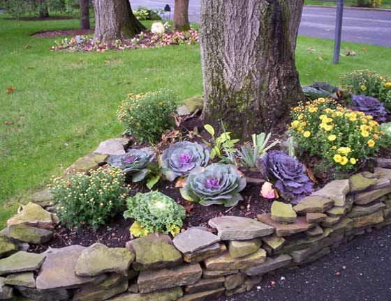 17 Best Images About Ornamental Cabbage Planter On Pinterest