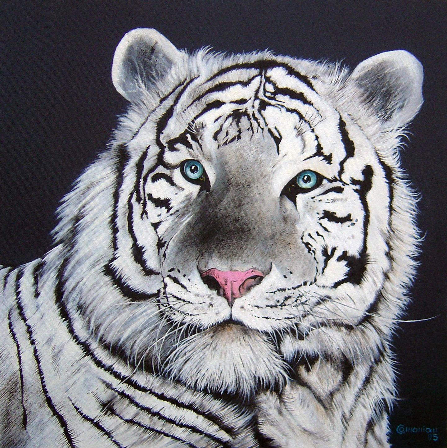 Tigre Branco Tigre Branco Tigre Gatos Selvagens