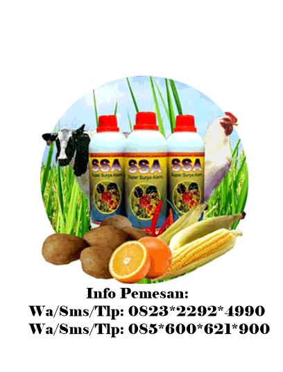 Pertanian Organik Di Yogyakarta