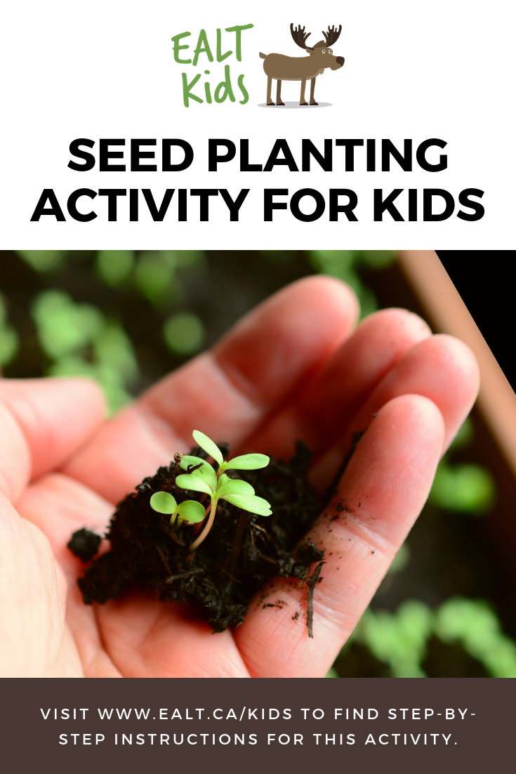 Seed Planting In 2020 With Images Planting Seeds Plants Seeds