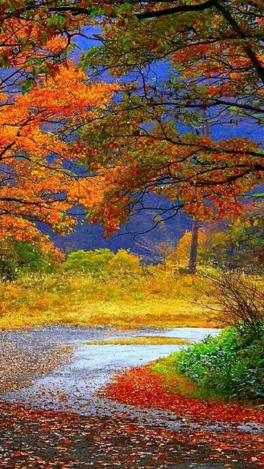 Bello paisaje de otoño.   SITIOS MARAVILLOSOS   Pinterest   Paisaje ...