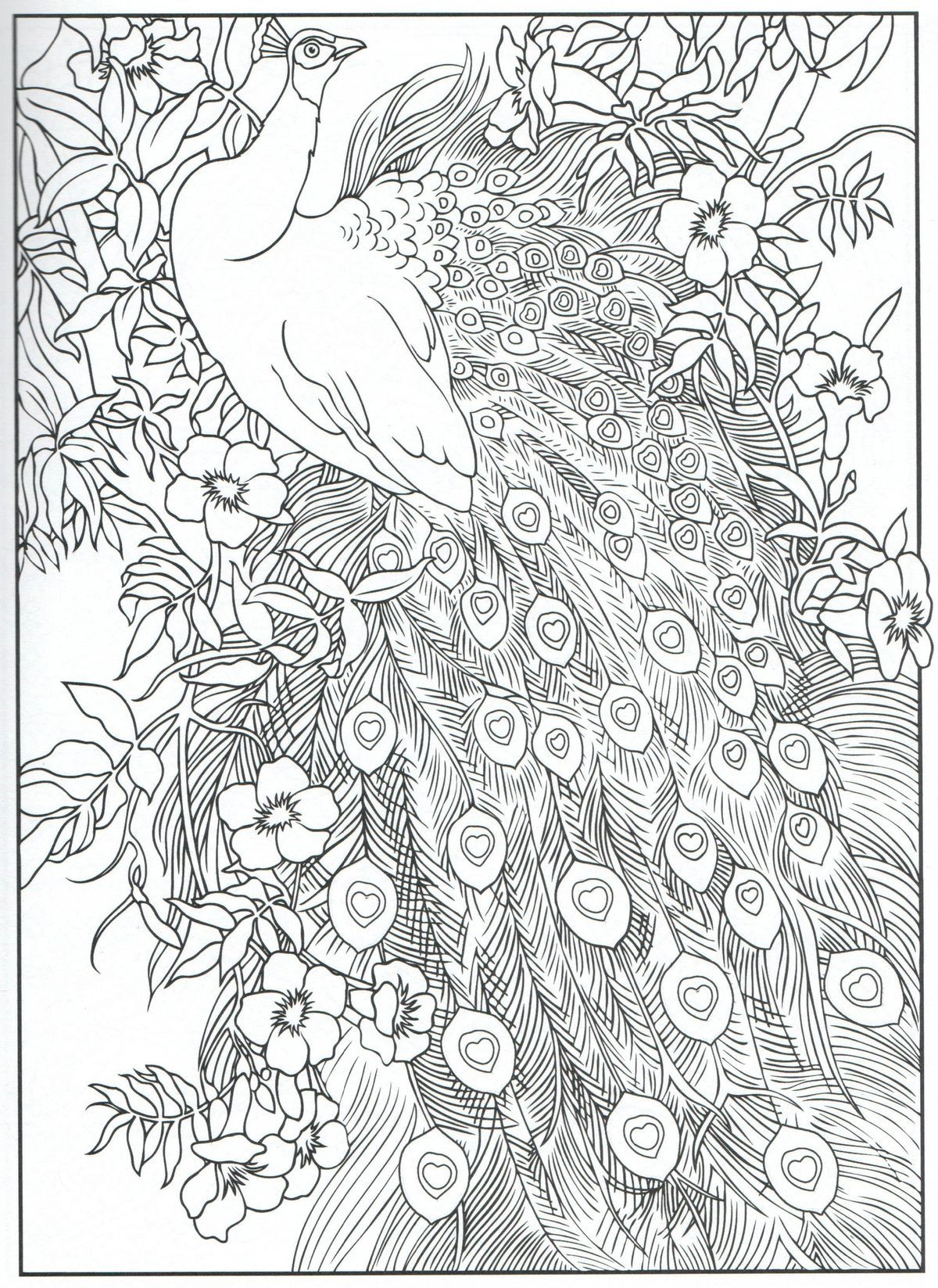 Peacock Coloring Pages Designs Coloring Books Mandala Coloring Pages