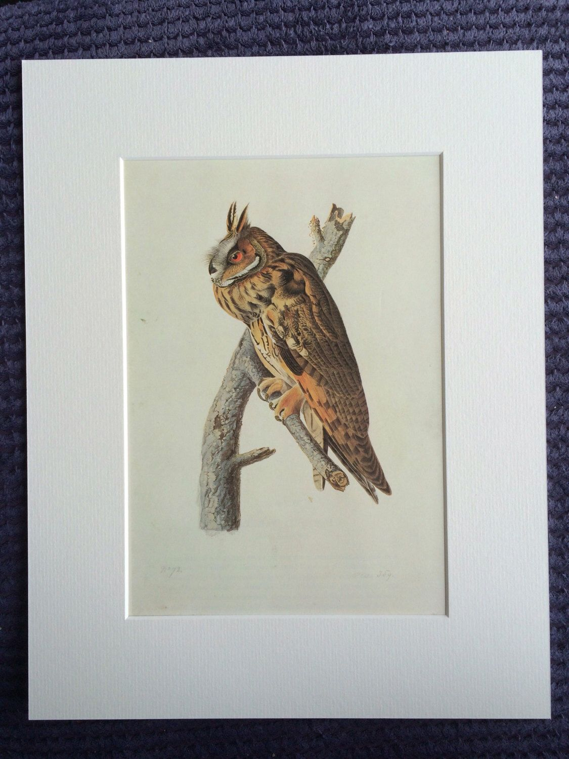 1966 Long Eared Owl Original Vintage Audubon Print Available
