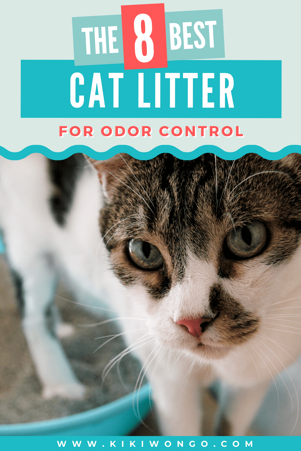 The Top 8 Best Cat Litter For Odor Control In 2020 Best Cat Litter Cat Litter Odor Cat Litter Dust