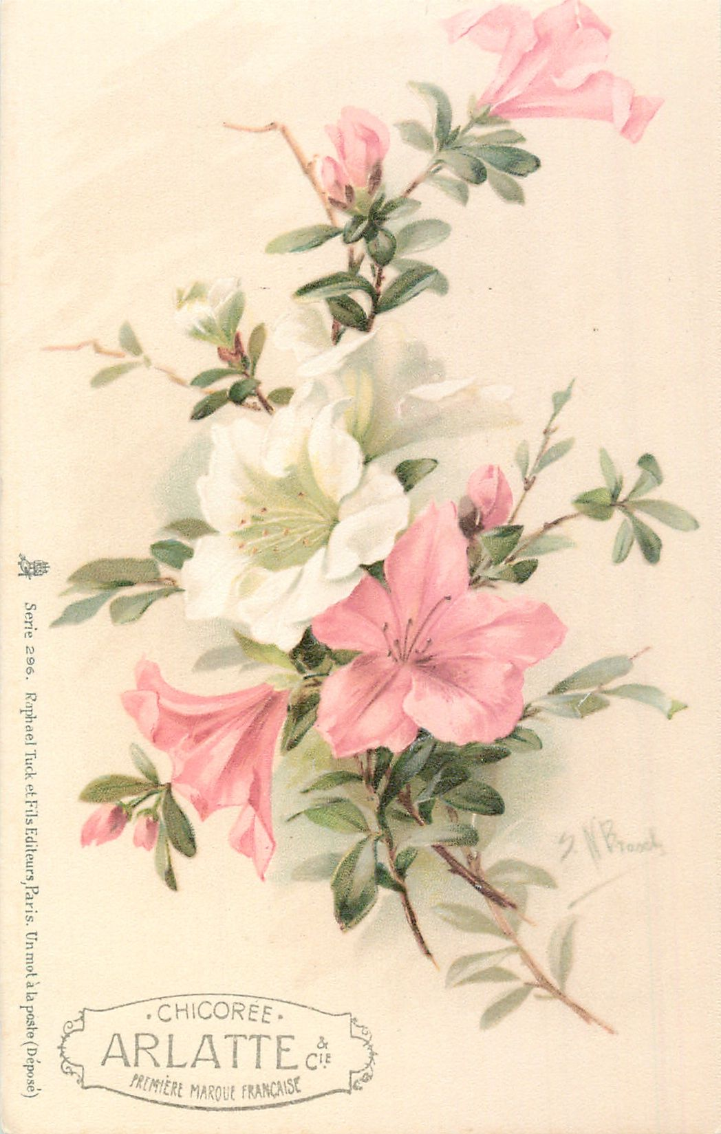 pink & white azaleas (With images) Flower art painting