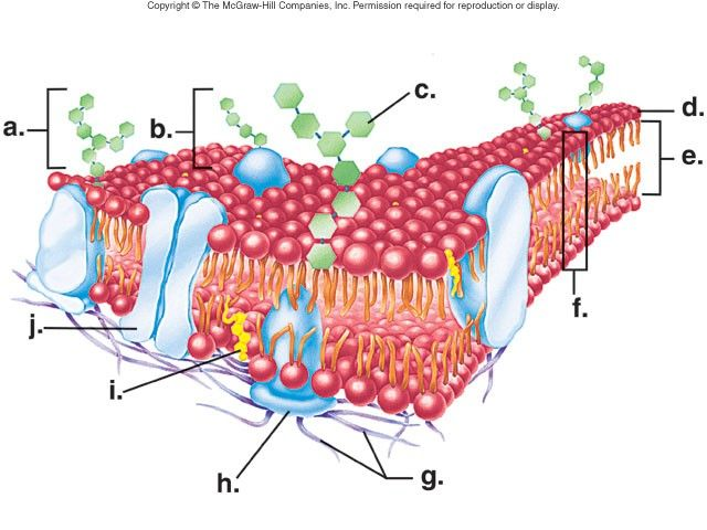 Cell Membrane Structure Diagram | Cell Membrane | Biology ...