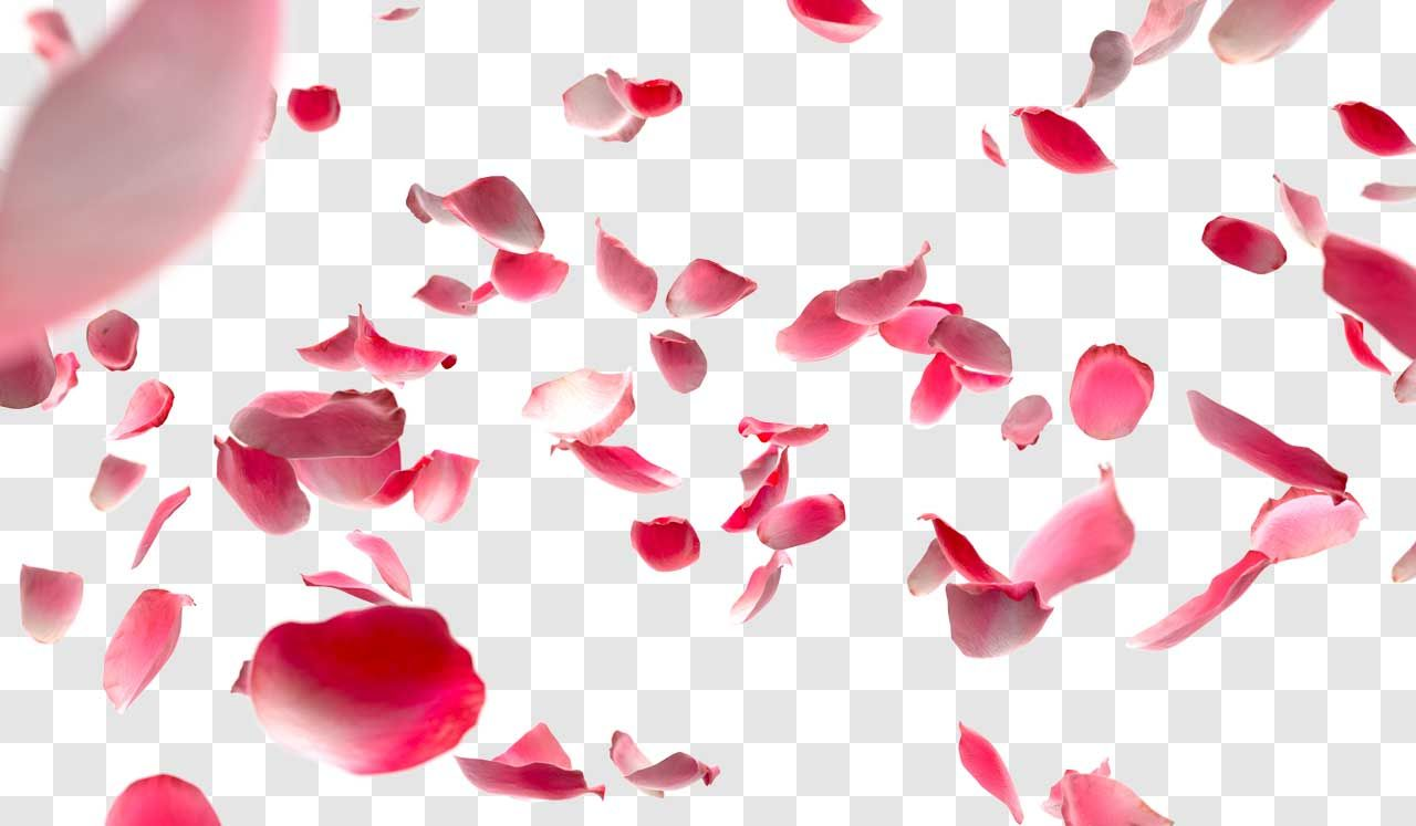 Pink Feathers Falling Wallpaper Pin By Paraclete Press On Beautiful Rose Petals Image