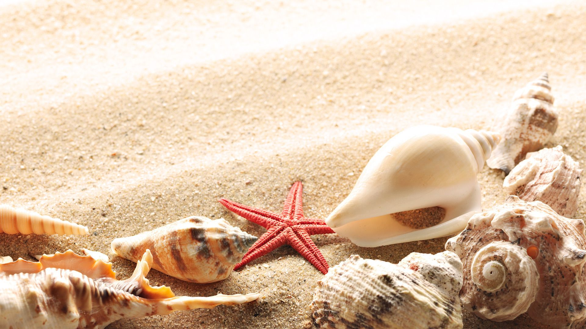 Wallpaper Seashells Summer Beach Sand Sun Theme Macro Download
