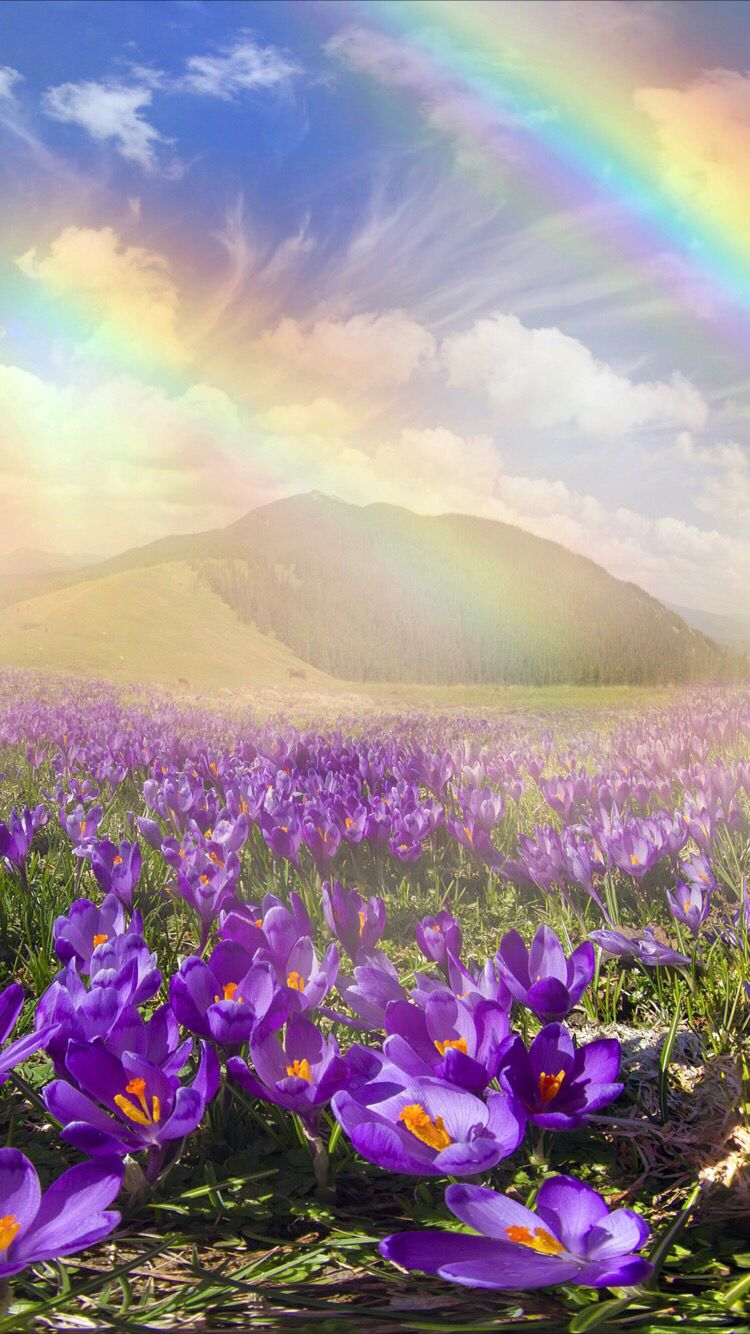 How rare are double rainbows? | HowStuffWorks  |Double Rainbow Wallpaper